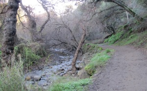 picture of Creek Trail along Penitencia Creek