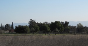 image of Santa Cruz Mountain skyline including Loma Prieta and Mt Umunhum
