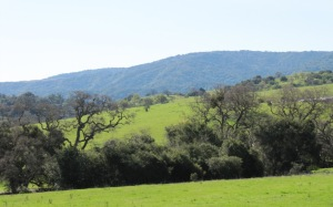 photo of green foothills in front of Santa Cruz Mountains