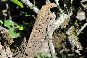 photo of lizard warming up in the sun