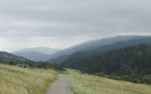 image of Santa Cruz Mountains under grey skies