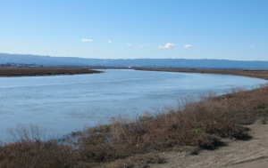 image of Alviso Slough