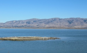 image of Mission Peak, Mt Allison, and Monument Peak from Alviso Slough Trail