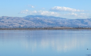 image of Mt Hamilton reflected in a salt pond