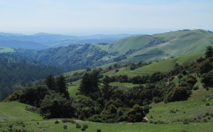 image of green hills in Russian Ridge Open Space Preserve