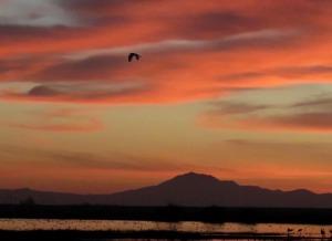 picture of Mt Diablo sunset