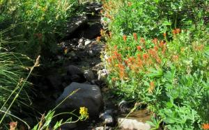image of paintbrush at a stream crossing